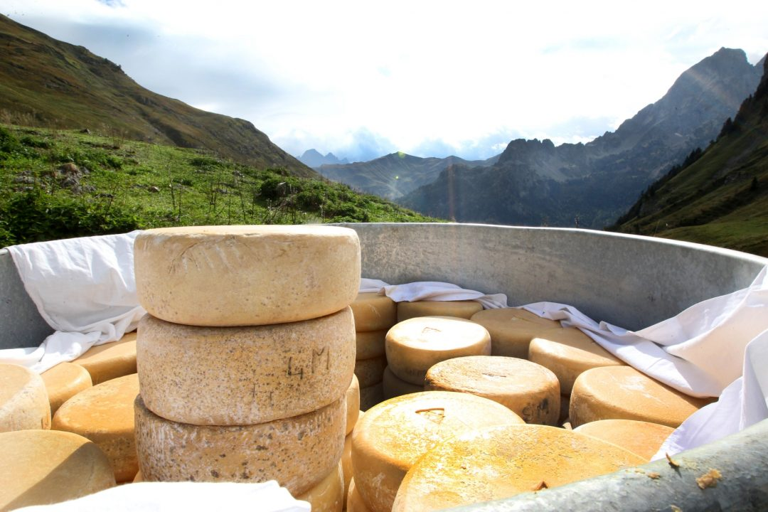 la descente des fromages des estives à Bious Artigues