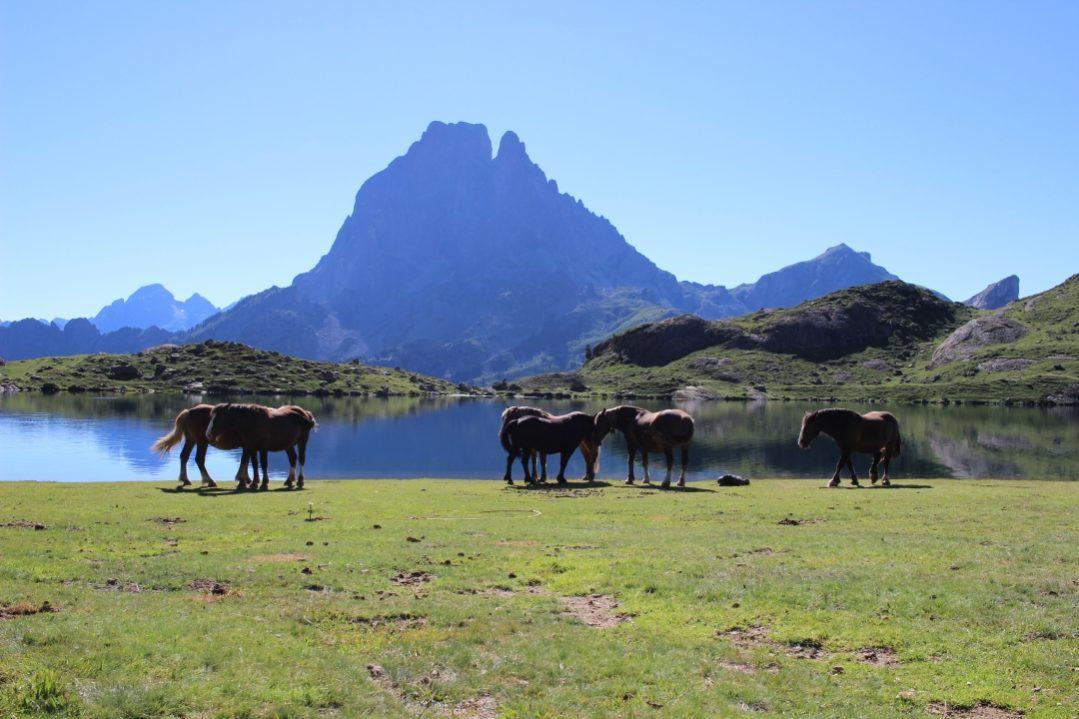 Pic d'Ossau et Lac Ayous chevaux ©Kindabreak.com