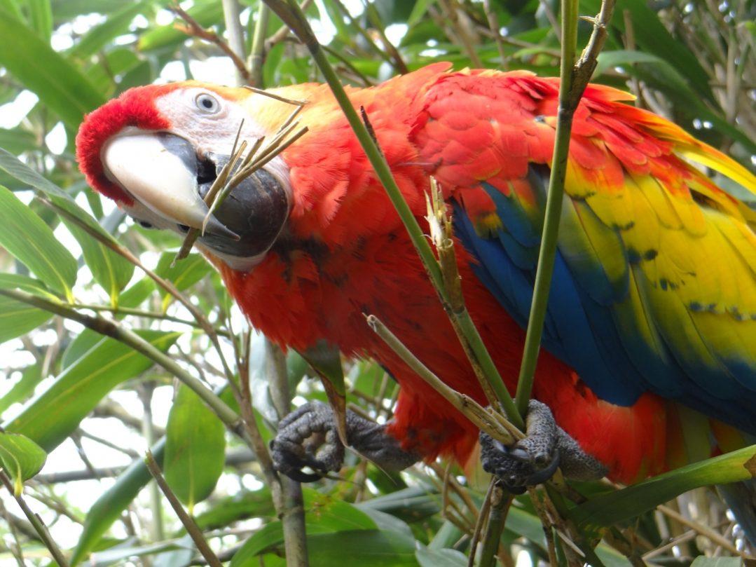 Zoo d'Asson Ara ©OT Pays de Nay
