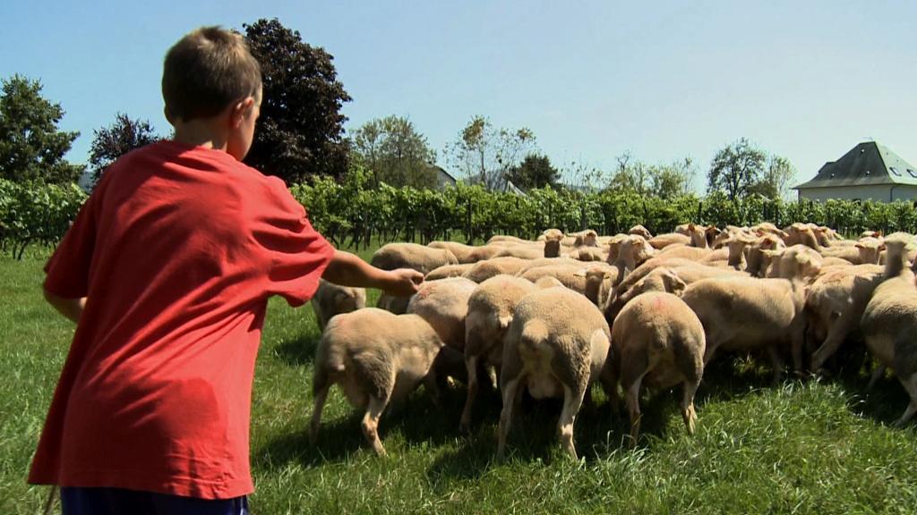 Enfant-a-la-ferme-brebis-©CDT64-Medialab